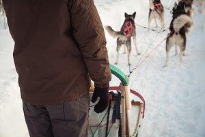 Man on a sleigh ride with Siberian husky