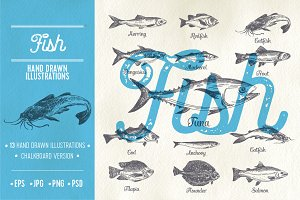 Hand drawn fish illustrations