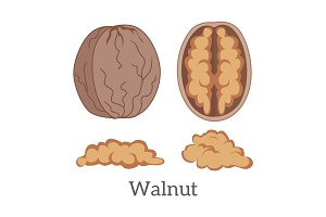 Illustration of Walnut Kernels