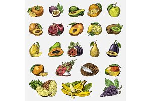 set of hand drawn, engraved fresh fruits, vegetarian food, plants, vintage orange and apple, grape with coconut, gragonfruit, pear, peach, plum.