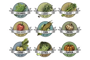 Vintage set of labels, emblems or logo for vegeterian food, vegetables hand drawn or engraved. Retro farm american style.