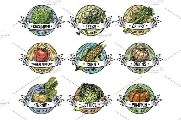 Vintage Set Of Labels Emblems Or Logo For Vegeterian Food Vegetables Hand Drawn Or Engraved Retro Farm American Style
