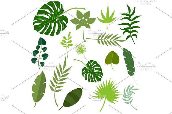 Tropical Leaves Palm Summer Exotic Jungle Green Leaf Vector Illustration