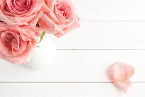 Pink roses stock photography #0418