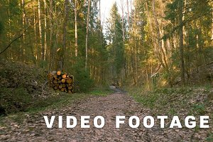 Road in the forest - flying camera shot
