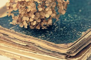 Dried Hortensia on the old book