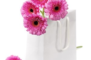 colorful pink daisy gerbera flowers