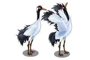 Two Japanese crane. Vector bird