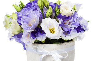 eustoma flowers