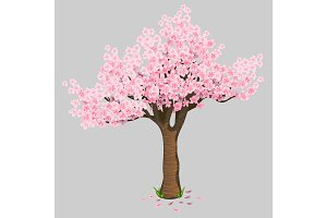 Beautiful tree cherry blossoms. Gentle Sakura