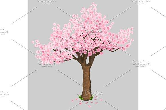 Beautiful Tree Cherry Blossoms Gentle Sakura