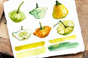 Squash, Watercolor. Vegetables