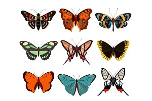 Realistic butterfly and moth collection
