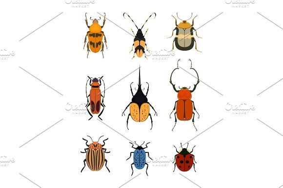 Bug Icon Set Isolated On White