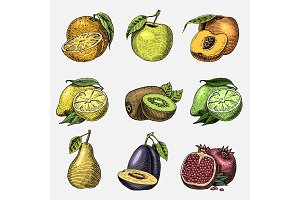 set of hand drawn, engraved fresh fruits, vegetarian food, plants, vintage orange, apple and kiwi, lemon and lime, pomegranate with peach, plum and pear