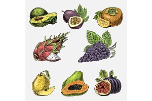 set of hand drawn, engraved fresh fruits, vegetarian food, plants, vintage grape, papaya, pitaya or dragon fruit, passion fruit, avocado and common fig