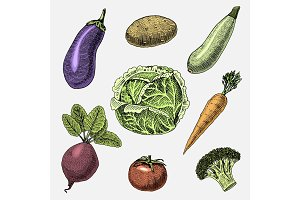 set of hand drawn, engraved vegetables, vegetarian food, plants, vintage looking cabbage, eggplant and beetroot, tomatoes and broccoli, carrot and zucchini.