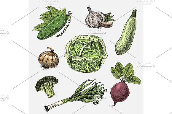 Set Of Hand Drawn Engraved Vegetables Vegetarian Food Plants Vintage Looking Cabbage Cucumber And Zucchini Beetroot Leeks Onion And Garlic