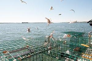 Seagulls following lobster boat
