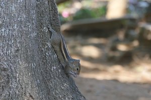 Chipmunk sitting on a tree trunk in the park eating seeds. Forest at background. Close up
