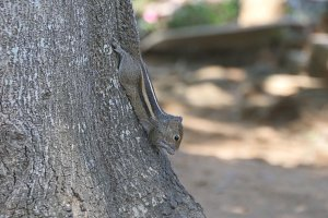 Chipmunk sitting on a tree trunk in the park and eating seeds then runs away. Forest at background. Close up