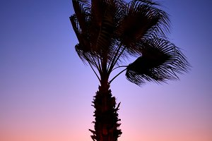 Palm tree in sunset light