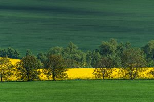 South Moravia landscape