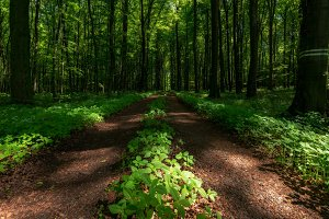 Forest in South Moravia