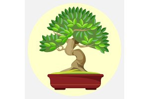 Bonsai Japanese art form using trees grown in container vector