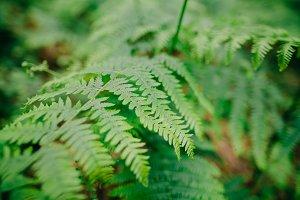 fern leaves macro