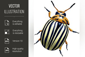The Colorado potato beetle