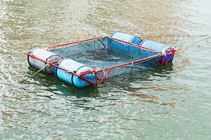 Floating net cage for fish