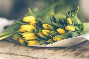 Yellow tulips - II