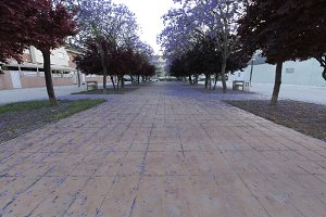 Walk in Elche with flowering trees.