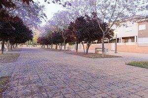Walk in Elche with flowering trees.