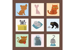 Cute cats cards character different pose funny animal domestic kitten vector illustration.