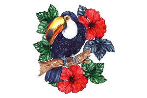 Watercolor toucan hibiscus isolated