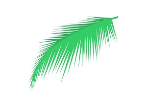 Palm leaf vector object