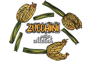 Zucchini vector collection