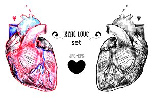 Realistic human hearts
