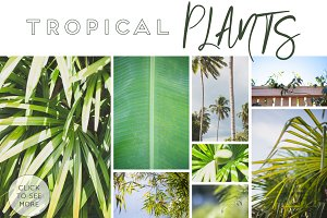 GREEN TROPICAL PLANTS