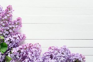 Lilac flowers floral background