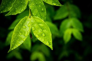 water drop on the leaves after rain