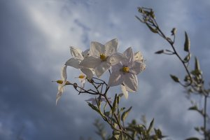 White flower with blue sky