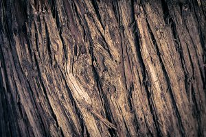 Vertical diagonal tree wood texture lines in detail in vignettes