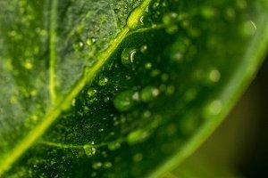 Rain Spotted Leaf