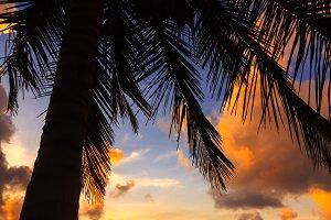 Belize Caye Caulker, Coconut Sunset
