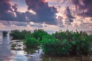 Mangroves in Caye Caulker