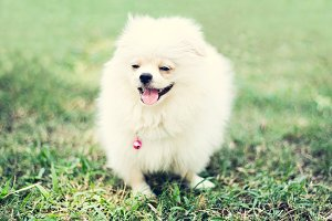 Small Cute Dog is Smiling