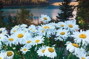 Blooming Flowers in Emerald Lodge